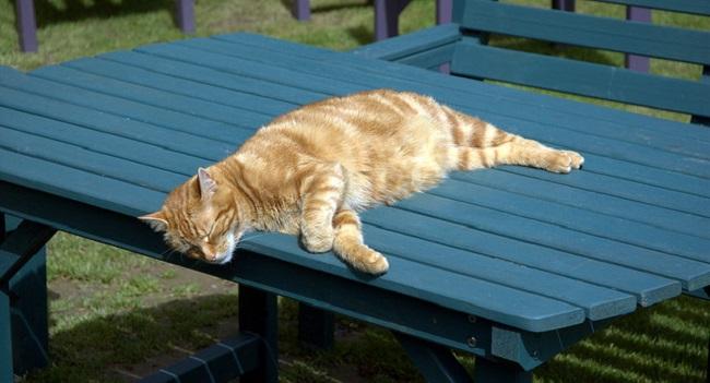 relxed cat