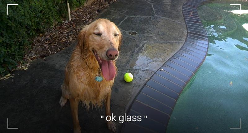 Okay Glass Dog
