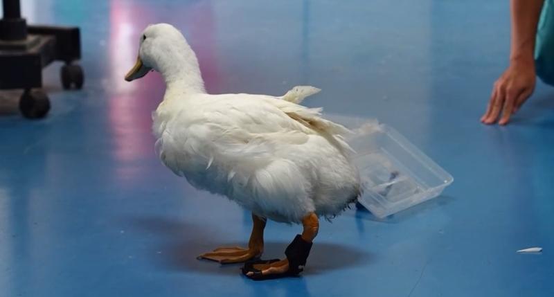 quack quack 3d print