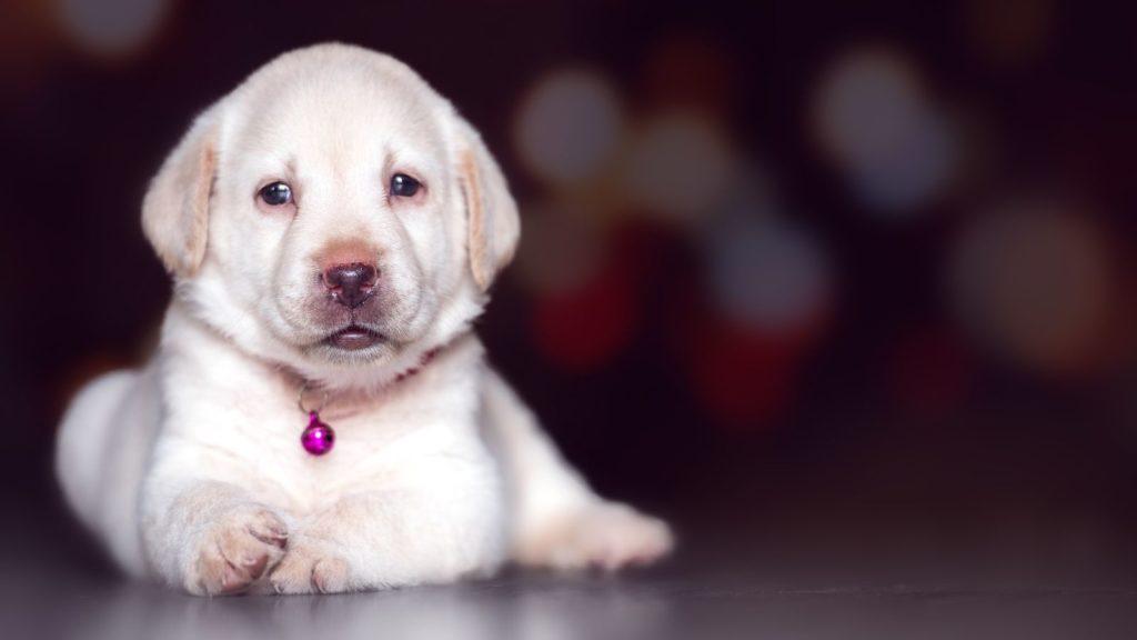 puppy subreddits pixabay