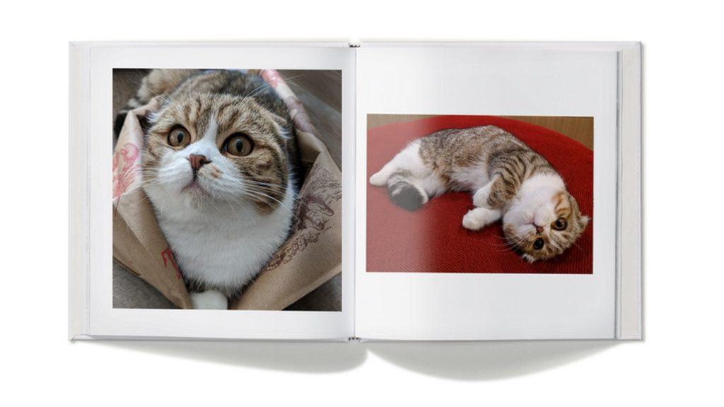 google photos lens cat book