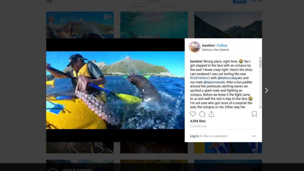 kayaker seal octopus instagram video