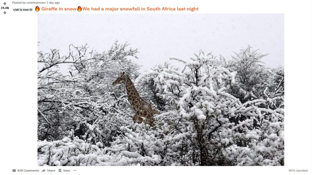 reddit giraffe snow south africa