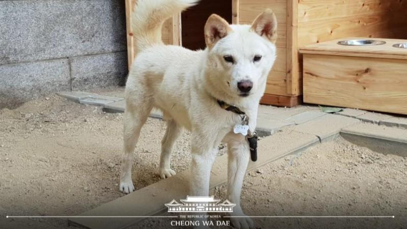kim jong un south korea dogs puppies