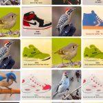 sneakers birds twitter dario taraborelli