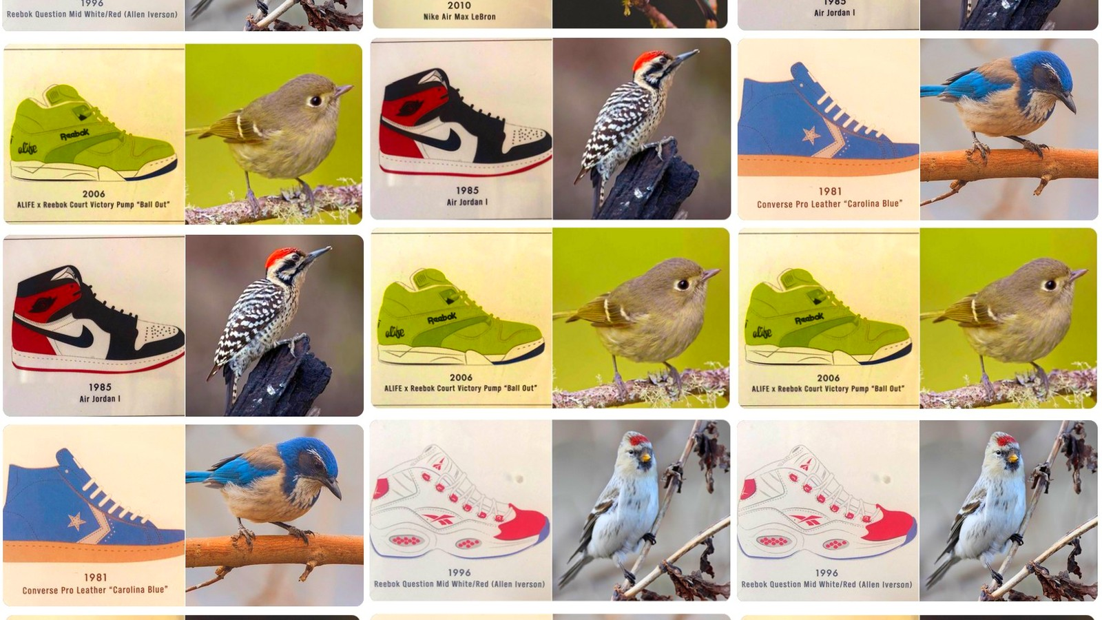 5ccc7ff7 'Sneakers & Birds' is a Twitter thread for shoe lovers and birdwatchers  alike - Memeburn