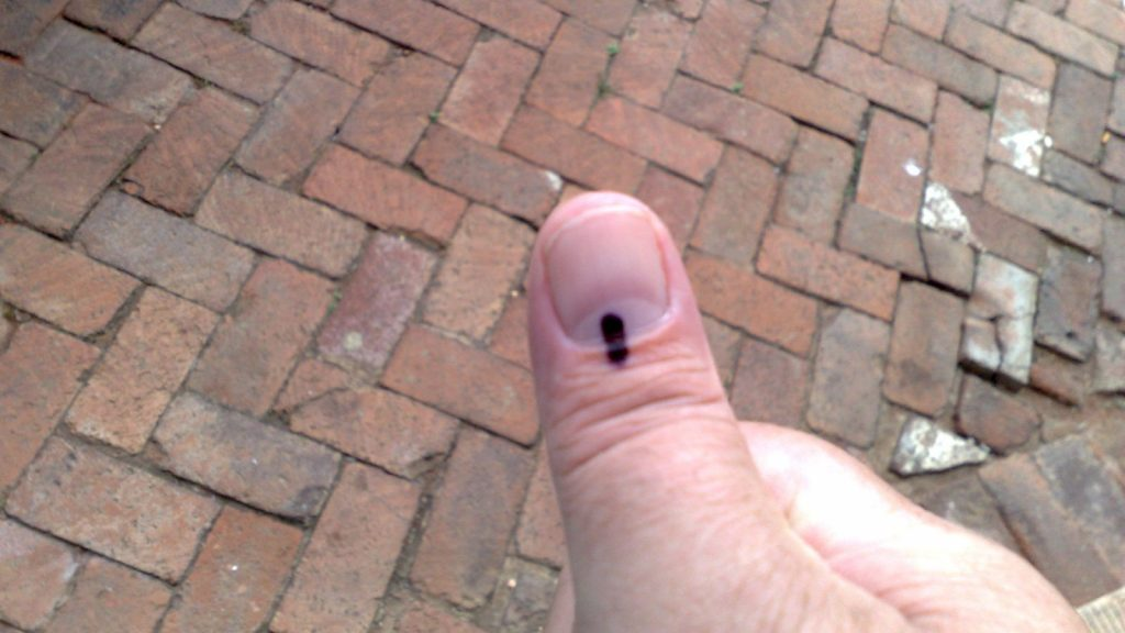 voters thumb sa elections retnev flickr