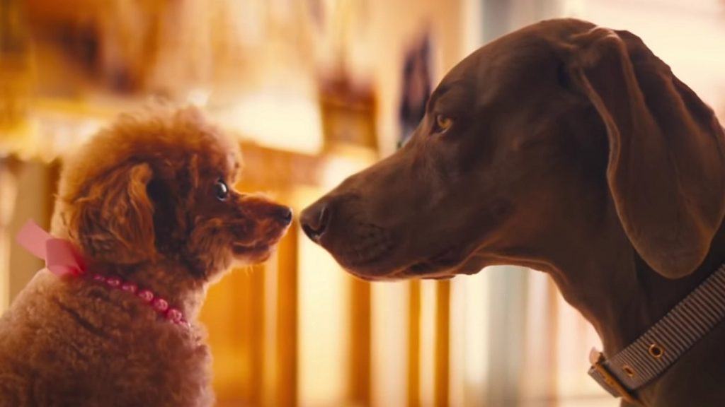 katy perry small talk music video dogs