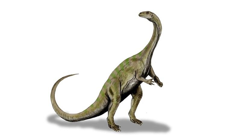 south africa dinosaur ngwevu intloko