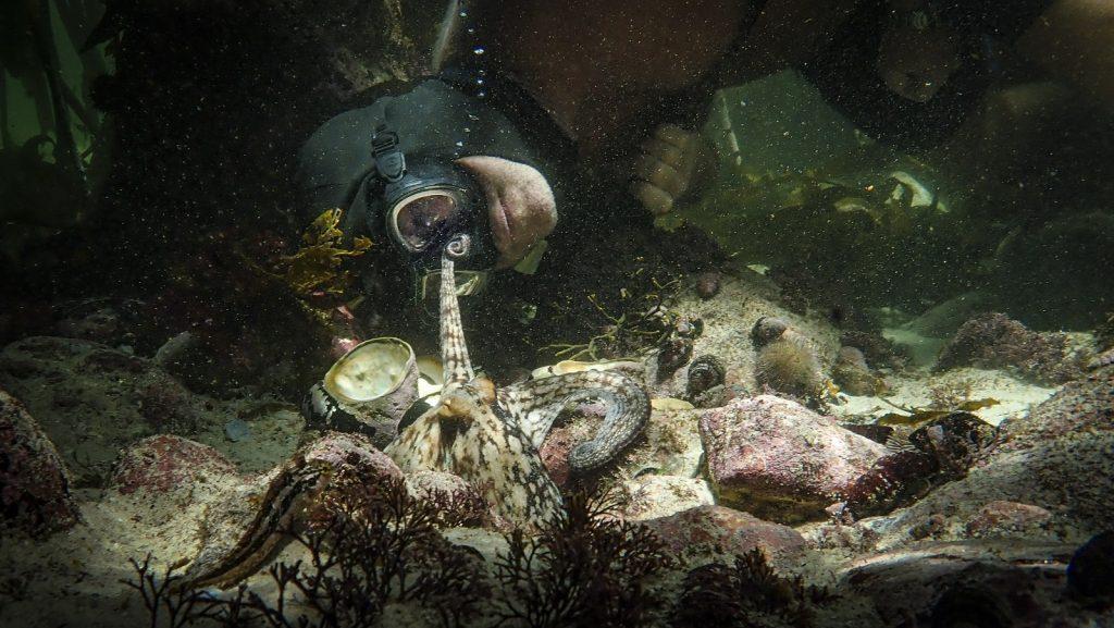 My Octopus Teacher Netflix Craig Foster