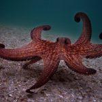 My Octopus Teacher Netflix Oscars Academy Awards Best Documentary Feature