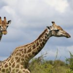SANParks South Africa national parks Kruger Away for Repair reality tv